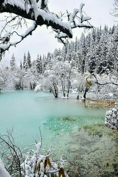 Winter in Forest ⛄