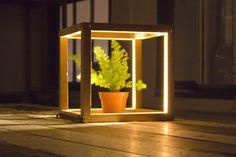 light cube frame, plant-in city