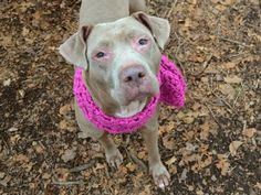 Safe - 3-3-2018 Manhattan  Rescue: Second Chance Rescue Please honor your pledges: https://www.nycsecondchancerescue.org/donate/CHERRY BEAR - 21327 - - Manhattan TO BE DESTROYED 03/03/18 – A volunteer writes: Cherry Berry is everyone's baby, a shy but affectionate sweetheart with wistful eyes and a heart made for loving. You just want to