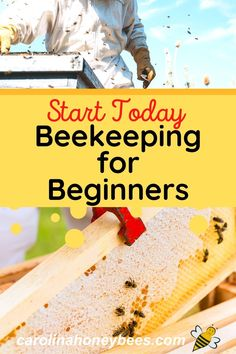 Starting a Beehive. Everything you need to know about getting started in beekeeping for beginners. #carolinahoneybees