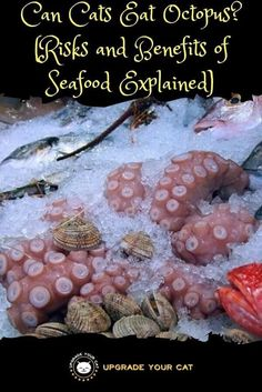 Can cats eat octopus, squid, clams, and other seafood? Is it safe for them, how should you prepare it? Here are the answers to these questions and more. Cat Health Care, Food Poisoning, Types Of Food, Balanced Diet, Different Recipes, Clams, Cat Food, Oysters, Yummy Treats