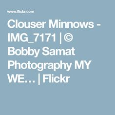 Clouser Minnows - IMG_7171 | © Bobby Samat Photography MY WE… | Flickr