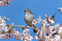Весна, ты так прекрасна!. Обсуждение на LiveInternet - Российский Сервис Онлайн-Дневников