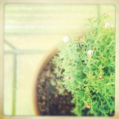 flowers garden green