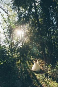 enchanted forrest