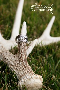 Wedding rings and deer antler