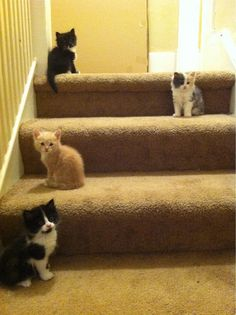 For home decor, a kitten on each stair step is a fashionable must.