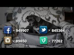 Boulevard Of Housebroken Dreams - boy culture Famous Dogs, Crutch, Dream Boy, Social Media, Culture, Dreams, Boys, Animals, Animales