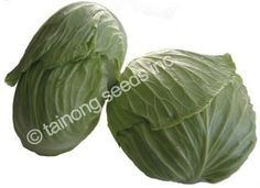 Shoshudori cabbages.  Reported to be very flavorful.