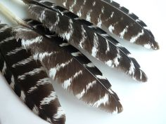 SILVER PHEASANT FEATHERS , Natural, Very Rare /  921