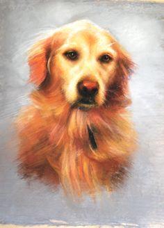 Fine art, commissioned pet portrait of golden retriever executed in pastel by Carol Vogel....  carolvogelstudio.com