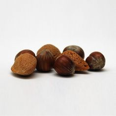 Nuts are healthy, make easy snacks, and pack a lot of protein. But not all nuts are created equal. Discover the best nuts in terms of cost and health benefits.
