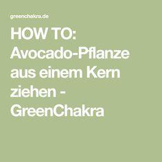 HOW TO: Avocado-Pflanze aus einem Kern ziehen - GreenChakra