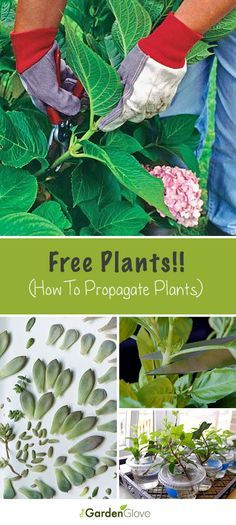 Free Plants!! • Tips and How-To's on propagating plants!