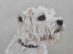 Terrier - Chalk and charcoal on paper Tiffany Landale - Bespoke Portraiture -  www.foxkay.co.uk Art Van, Tiffany, Dog Cat, Terrier, Rabbits, Cats, Drawings, Bespoke, Charcoal
