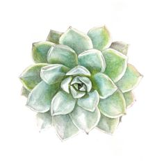 Items similar to Succulent Watercolor Print Set - Any TWO Succulent Art, Succulent Print / OR Botanical Prints, Modern Home Decor on Etsy Succulents Drawing, Blue Succulents, Watercolor Succulents, Planting Succulents, Watercolor Flowers, Watercolor Print, Watercolour Painting, Painting Prints, Art Prints