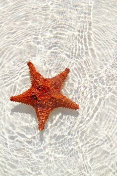 Starfish orange in wavy shallow water.