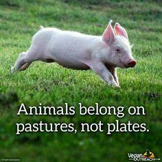 Pro vegan: animals belong on pastures, not plates.