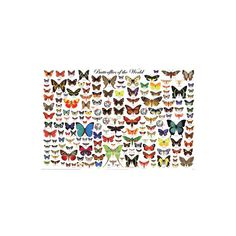 Laminated Butterflies of the World Educational Science Chart Poster... ($24) ❤ liked on Polyvore featuring home, home decor, wall art, butterfly home decor, butterfly chart, butterfly poster and butterfly wall art