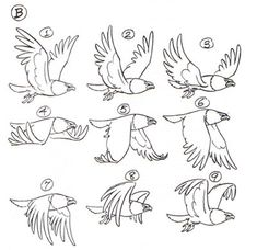 """doubledrefs: """" Making a short animation gif for today's Pokedex meme today so I'm stockpiling resources. Flight Cycle of a Bird picture from this article [X] More Bird in Flight Cycles and Anatomy [X] Animation Timing [X] """" Animation Storyboard, Animation Sketches, Animation Reference, Art Reference, Animation Process, Design Reference, Flying Bird Drawing, Fly Drawing, Wings Drawing"""
