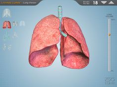Living Lung app! Free app to show how the lungs work-Grossology