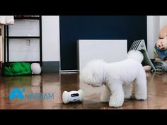 48 Best Varram Pet Product images in 2019 | Dog care, Make a