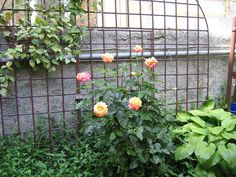 Roses #photography #digitalart #Bucharest