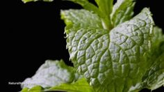Piątka ogrodowych ziół zwalczających raka
