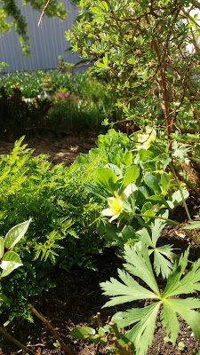 RunoMaalari: Salainen puutarha