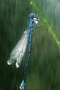 Rain by Vadim Trunov, via 500px