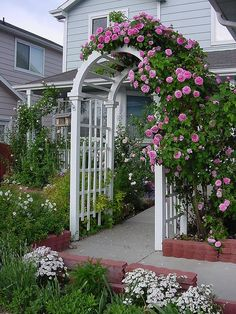 """rose Arbor Sadly, I have no variety what variety the climbing rose is. The previous owner who planted it said simply, \""""oh, it's a pink one\"""" and had no idea it was even a climbing rose. Pictures of my garden in Westminster, Colorado. Garden Archway, Garden Arbor, Garden Trellis, Garden Beds, Small Front Yard Landscaping, Backyard Landscaping, Landscaping Ideas, Backyard Pergola, Beautiful Gardens"""