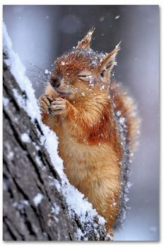 Es gibt keine niedlicheren Tiere als das Eichhörnchen. Oder wie mein kleiner Br There are no more cute animals than the squirrel. Forest Animals, Nature Animals, Animals And Pets, Baby Animals, Funny Animals, Cute Animals, Animals In Snow, Spring Animals, Wildlife Nature