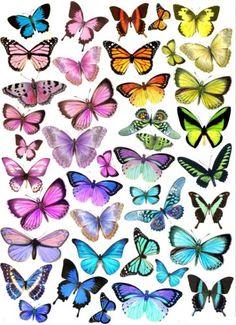 Tortendekoration-Schmetterlinge-essbar-Muffin-Tortenaufleger-butterfly-Dekoration 6,5