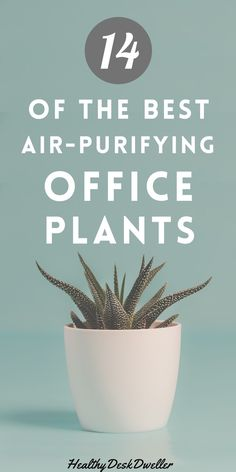 These cute, small desk plants will make you happier and more productive while adding some much needed style to your home office decor. They're small enough to fit almost anywhere on even the smallest of desks. Work smart and stay healthy as these office desk plants naturally purify the air for you! Home Office Furniture, Home Office Decor, Furniture Ideas, Cool Office Desk, Coffee Plant, Money Trees, Office Plants, Cacti And Succulents, Air Purifier