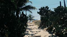 Beach • para ver mais, siga meu instagram/ to see more, follow my instagram: dazinex