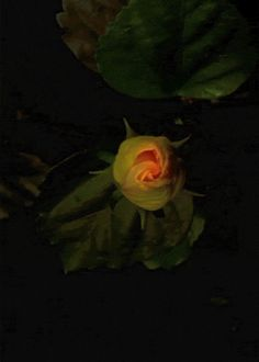 I wonder if this flower will open like it just did when I watched it :)