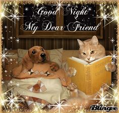 Let me tell you a bedtime story, once upon a time a little brown dog ate my cat food. Then the dog mysteriously disappeared. Good Night Cat, Good Night Dear Friend, Good Night Prayer, Cute Good Night, Good Night Blessings, Good Night Wishes, Good Night Image, My Dear Friend, Good Night Messages