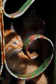 Kittens | by Primòr