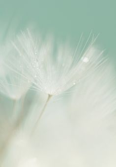 Pastel green and dreamy white Shades Of White, Shades Of Green, 50 Shades, Image Zen, Mint Green Aesthetic, Dandelion Wish, Pastel Colors, Pastel Mint, Mint Blue