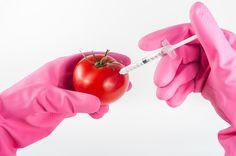 GMO - Temat żywności genetycznie modyfikowanej wywołuje sporo emocji. W związku z podpisaniem przez Unię Europejską umowy handlowej CETA, wiele osób obawia się zalewu żywności genetycznie modyfikowanej na rynek polski. Informacje na temat GMO podawane przez media w zdecydowanej większości nie odwołują się do rzetelnych badań naukowych, a opierają się na przypuszczeniach i przewidywaniach. Czy faktycznie powinniśmy obawiać się żywności genetycznie modyfikowanej?