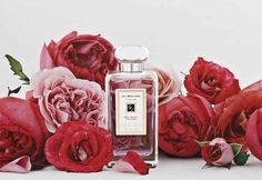 Jo malone red roses perfume - wedding scent (body butter) with French lime blossom cologne over the top Scarlet, Jo Malone, Red Roses, Bath And Body, Beauty Hacks, Beauty Tips, Perfume Bottles, Just For You, Pink