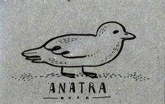 Learning Italian Language ~ Anatra (duck) IFHN