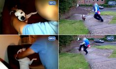 Shocking photos show teenager booting cat like a football and repeatedly punching pet dog in the face - but hooligan is only given 'rehabili...