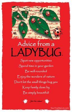 Advice from a Ladybug Frameable Art Postcard