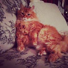 #Cutest #cat ever!!!