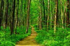"""""""Forest Bathing"""" as Stress-Reducer, Immune-Booster & Artistic Inspiration - Green Prints Magazine"""