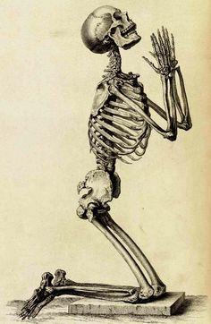 Skeleton Drawings, Human Skeleton, Skeleton Art, Art Drawings, Anatomy Drawing, Anatomy Art, Human Anatomy, Anatomy Reference, Art Reference