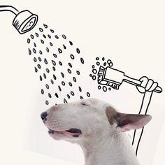 Engraçadas fotos de um cachorro Bull Terrier num apartamento vazio e branco.
