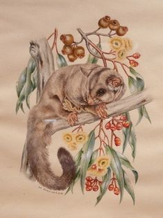 A sugar glider possum and pear fruited mallee (Eucalyptus, pyriformis).      Marion & Margaret Davidson did illustrations for many books, brochures and catalogues:  Breed standards / R.A.S. Kennel Control  Barking: The Sound of a Language Author: Harold R Spira  Canine Terminology Author: Harold R Spira  The World Encyclopedia of Dogs by Piero Scanziani, Catherine G. Sutton  The World Encyclopedia of Dogs Ferelith Hamilton (Editor), Arthur F. Jones (Editor)  Australian Weeds by Gai Stern