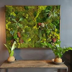 As New York living wall installers we sometimes get asked to install moss walls. A moss wall, as it sounds, is moss on the wall. They can be very beautiful. Moss Wall Art, Moss Art, Diy Wall Art, Succulent Wall Art, Plant Wall, Graffiti En Mousse, Jardin Vertical Artificial, Green Bedroom Walls, Vertical Garden Wall